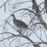 bird-hunting12